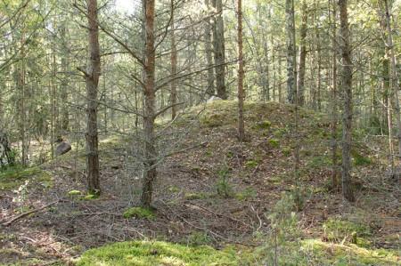 Männimäe mets